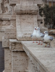Gulls sit on a bridge over the Tiber in Rome