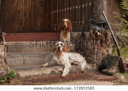 Gun dog near to shot-gun and trophies, horizontal, outdoors #172813583