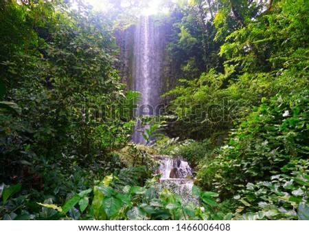 Gushing waterfall amidst lush greenery #1466006408