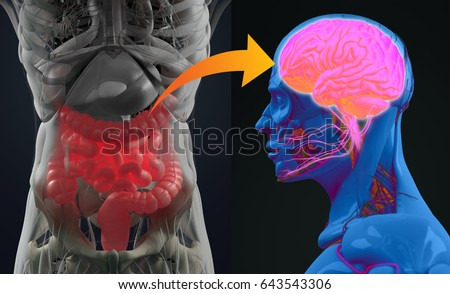 Gut-brain connection or gut brain axis. Concept art showing a connection from the gut to the brain. 3d illustration.  Stock foto ©