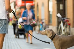 Guy in the city center with a dog on a leash. Urban scene.
