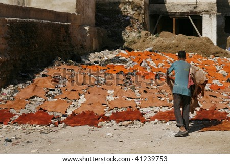 Guy laying out raw freshly colored animal skins for drying in the sun. Tannery in Fes (Fez), Morocco