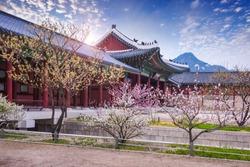 gyeongbokgung palace in spring, South Korea.