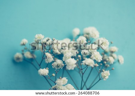stock photo gypsophila baby s breath flowers light airy masses of small white flowers 264088706 - Каталог — Фотообои «Цветы»