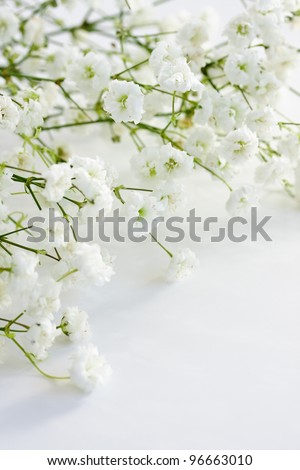 Gypsophila (Baby\'s-breath flowers), light, airy masses of small white flowers.