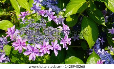 H.h. Dance party flower in garden field #1428940265