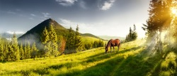 H horse in a pasture in the mountain valley. Landscape morning panorama of the mountains in summer