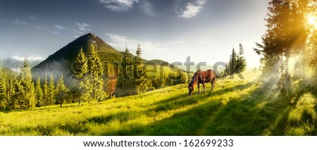 Stock Photo H horse in a pasture in the mountain valley. Landscape morning panorama of the mountains in summer