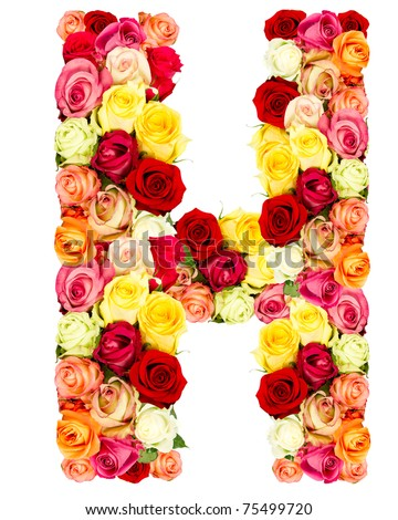 h alphabet in rose  roses flower alphabet isolated ...