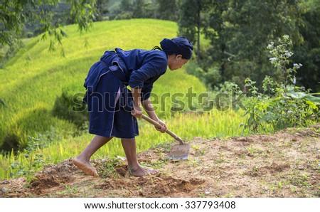 HA GIANG, VIETNAM - SEPTEMBER 19, 2015: Rice fields on terraced of Hoang Su Phi, Ha Giang, Vietnam. Rice fields prepare the harvest at Northwest Vietnam.Vietnam landscapes. #337793408