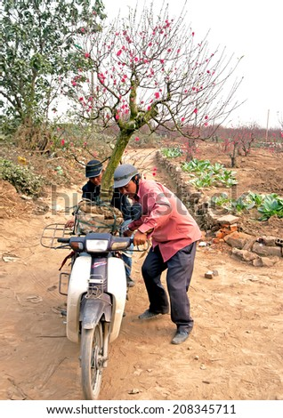 HA NOI, VIET NAM, January 12, 2014 the man (name unknown) was manipulating the honda motorcycle, they carry on the peach blossom tree, Lunar New Year, Spring
