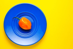 Habanero chili on blue plate and yellow background