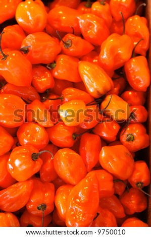 Habanero for sale on a market stall
