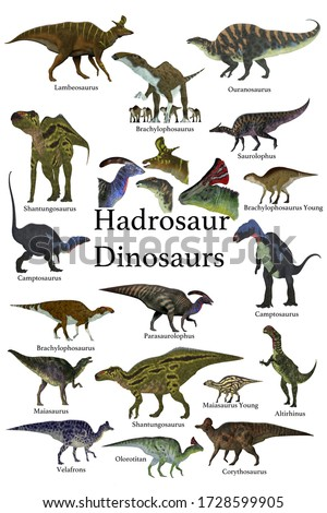 Hadrosaur Dinosaurs 3D illustration - This is a collection of ornithopod herbivorous Hadrosaur dinosaurs who have a duck-bill with some of them with a cranial crest.