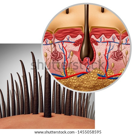Hair follicle anatomy diagram dermitology medical concept as human hairs with a shaft emerging from the scalp as a 3D illustration.