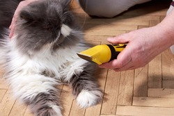 Haircut of a fluffy gray Persian cat. Pet grooming at home