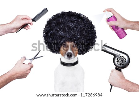 hairdresser  scissors comb dog hairdryer hairspray