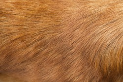 haired dogs