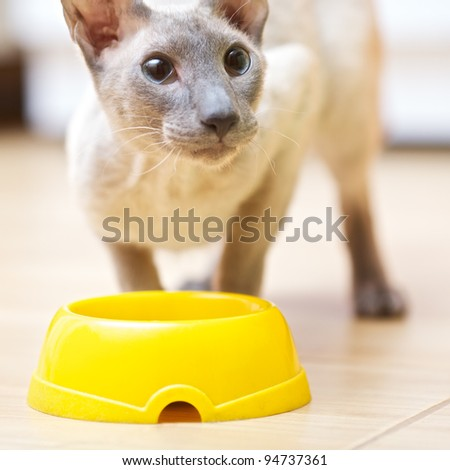 Hairless Cat Eating