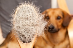 Hairy dog brush, Pet Grooming, Close up, dog in a background
