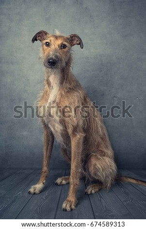 Hairy dog sitting #674589313