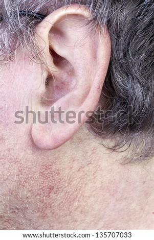 Hairy ear of elderly man closeup. Gray hair, the skin is covered with pores and blood vessels. Selective focus