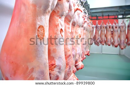 halal lambs in row in meat factory