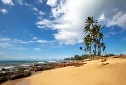 Hale'iwa Beach with waves and palm trees at Oahu, Hawaii, USA