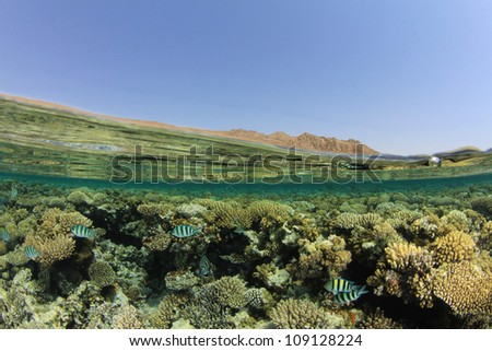 Half and Half (Split Image or Over Under) of Coral Reef, Water Surface and Sinai Desert in Egypt