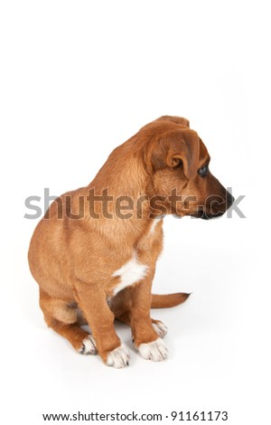 Half-breed dog isolated on a white background. #91161173