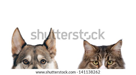 Half close up portraits of dog and cat in front on white isolated background