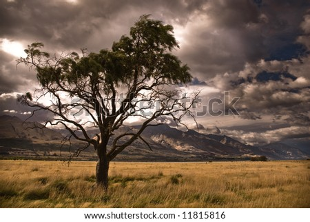 Half dead tree in stormy valley.