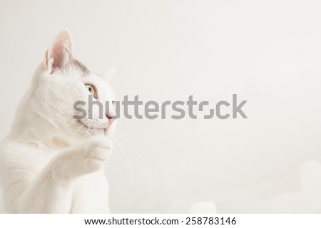 Half-length gray and white cat on a white background.