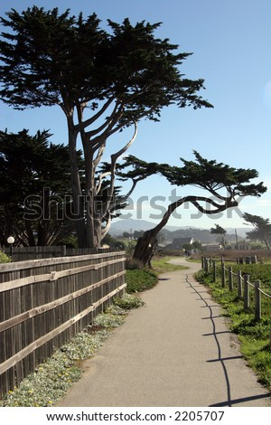 Half Moon Bay trees