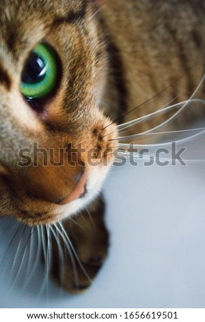 Half of the cat with green eyes caught looking up into the camera lens.Muzzle, whiskers and green eye of cute cat.Cute pet looking into the lens. Stock photo ©