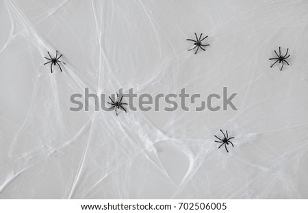 halloween and decoration concept - black toy spiders on artificial cobweb