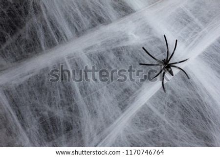 Halloween background decoration holiday concept. Close up of black spider on cobweb and black backdrop.