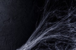 Halloween background with spider web  on the black background. Happy Halloween concept.