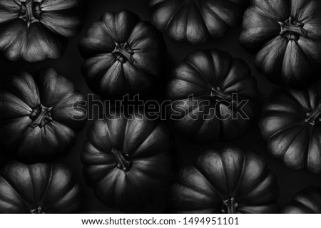 halloween black pumpkin on the black background