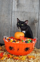 halloween candy and black cat