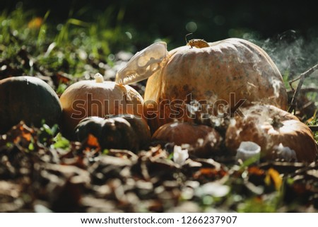 Stock Photo Halloween decor. 4k wallpaper. Old pumpkins, pomgranates, apples and skulls covered with dust stand on the ground in autumn forest