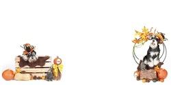 Halloween dog card, banner panoramic of miniature schnauzer in halloween theme