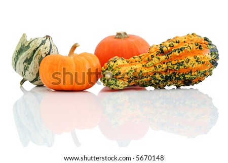 Halloween gourds with reflection isolated on white background.