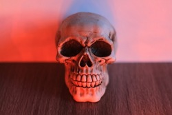 Halloween holiday and skull.  Background for Halloween.  Orange light.  The head of the skull stands on a tree.  Autumn day.