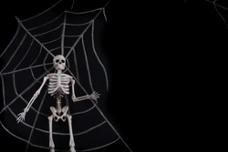 Halloween holiday grunge background with spider webs and dead skeleton on a dark background. Halloween, horror concept. Space for text.