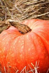 Halloween holiday. Pumpkin as an attribute of the sacrament