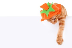 Halloween or Thanksgiving cat wearing pumpkin costume and holding sign or banner on white