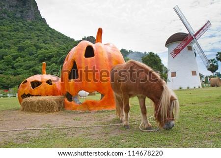 Halloween pumpkin and horse in garden