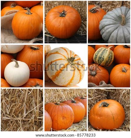 Halloween pumpkin display on the farm.