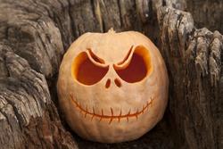 Halloween pumpkin in a wooden stump close up